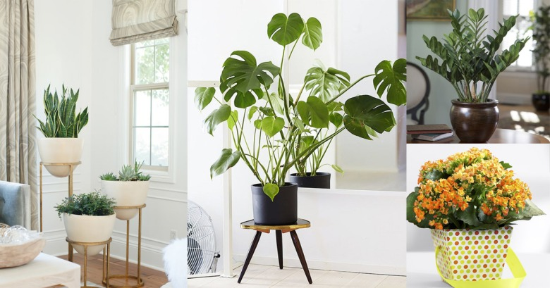 20-Best-Low-Maintenance-Houseplants-Any-One-Can-Grow3